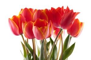 Tulipany na Dzień Kobiet, a może karnet do Szkoły Tańca